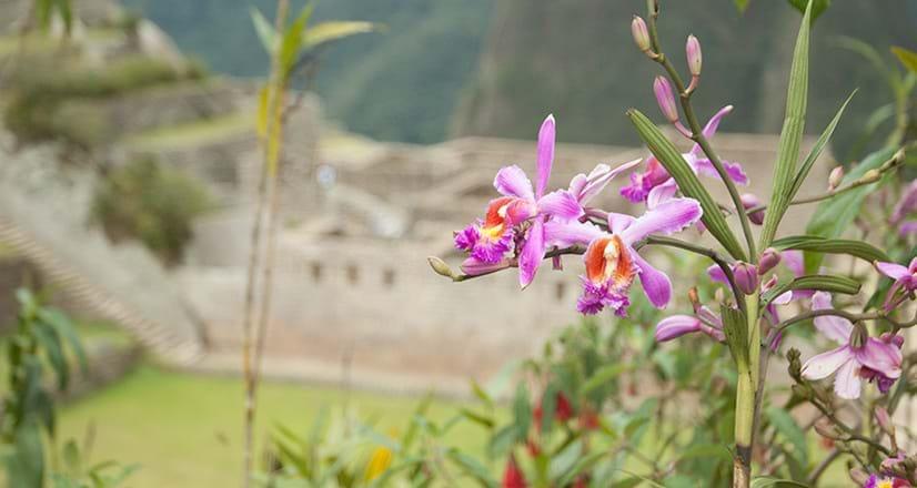 Orquídeas no Santuário