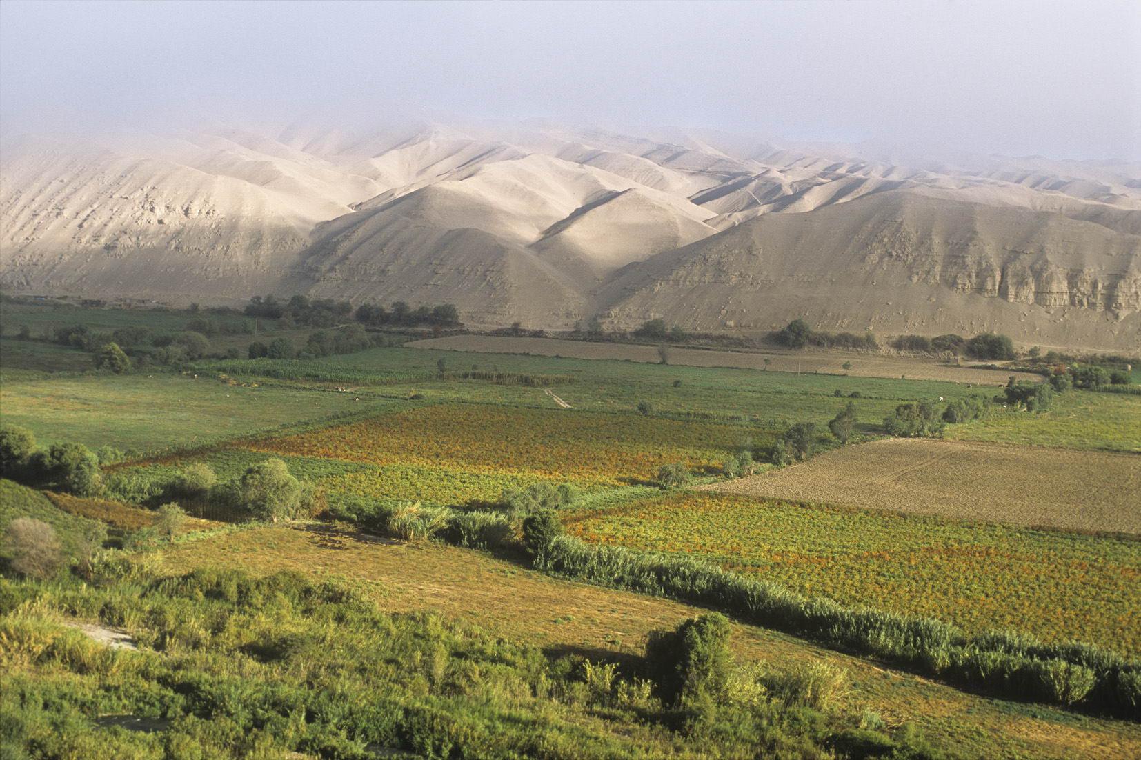 Resultado de imagen para valle de locumba