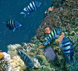 The Peruvian ocean contains a wealth of marine species.