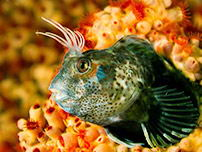 Peru's hidden treasure includes a large number of exotic fish species.