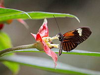 Tambopata rainforest is also home to several species of butterflies.