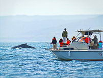 A group of people watching whales in the ocean off the coast of Piura.