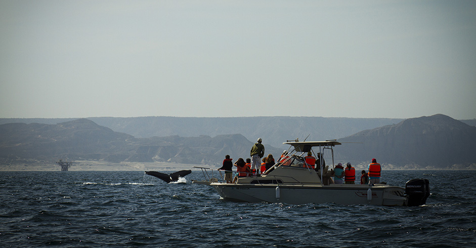 Whale watching in Piura.